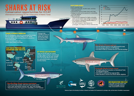Sharks at Risk