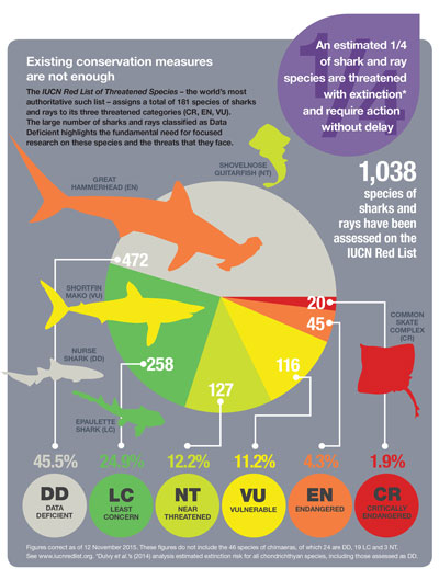 shark conservation measures graphic